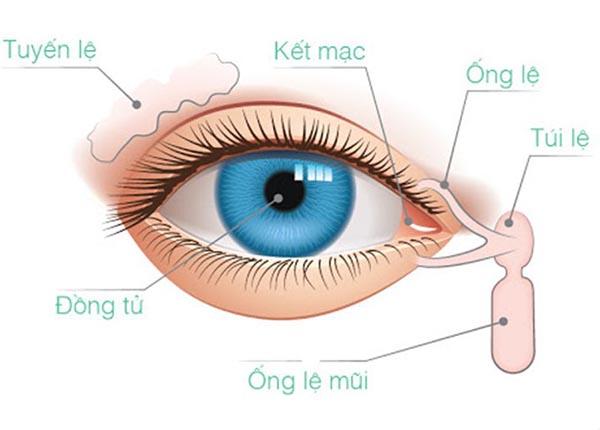 Tắc tuyến lệ hay còn gọi là viêm tuyến lệ xảy ra khi ống dẫn nước mắt bị chặn